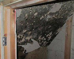Aspen Duct Cleaning Services is certified  for professional mold remediation